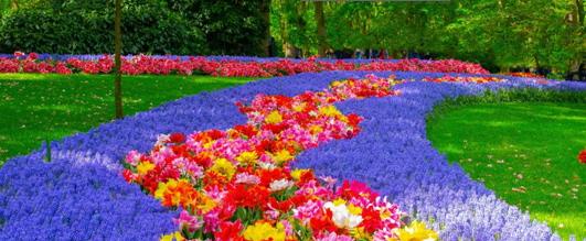 parada-kwiatow
